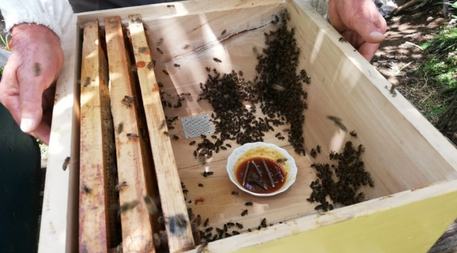 Mevsim şartları ve bilinçsiz besleme arı ölümlerine neden oldu