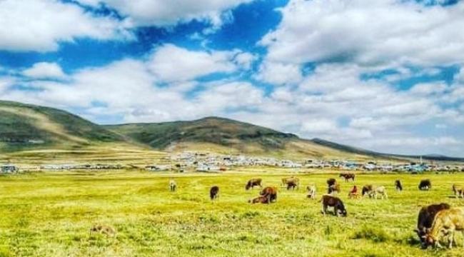 Ardahan'da 4 köy karantinaya alındı